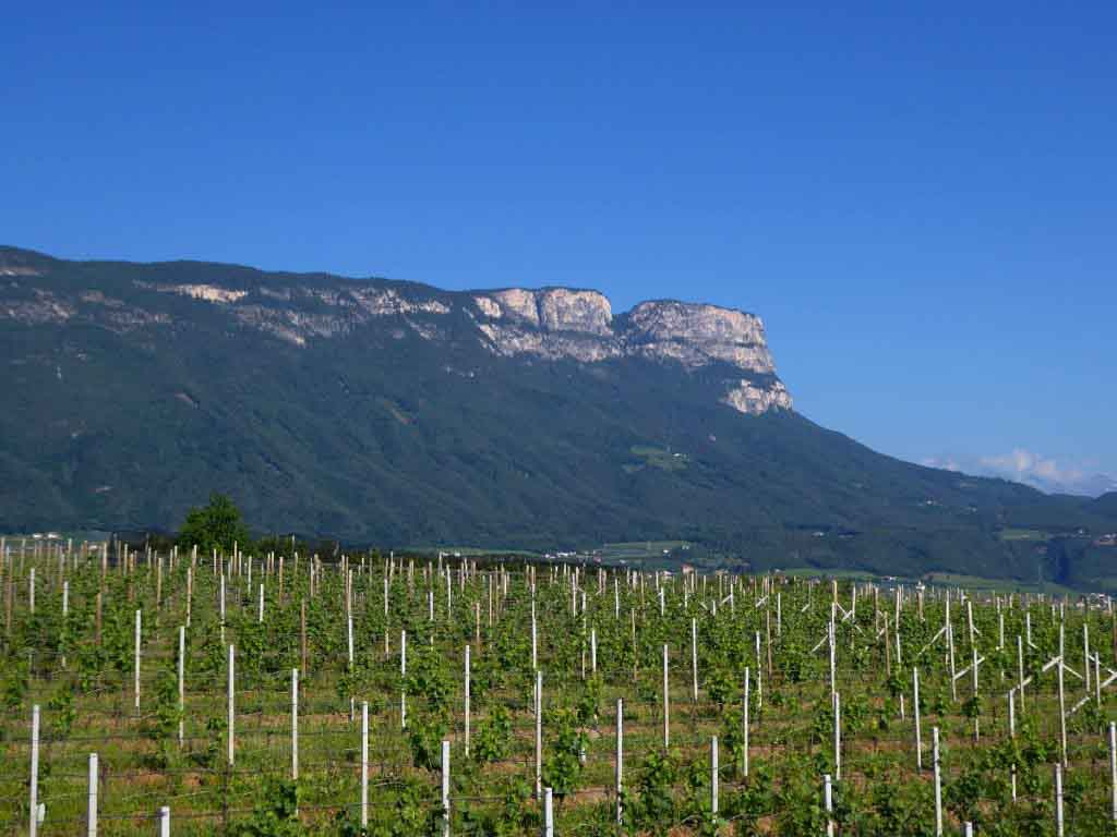 Vineyards of Eppan South Tyrol