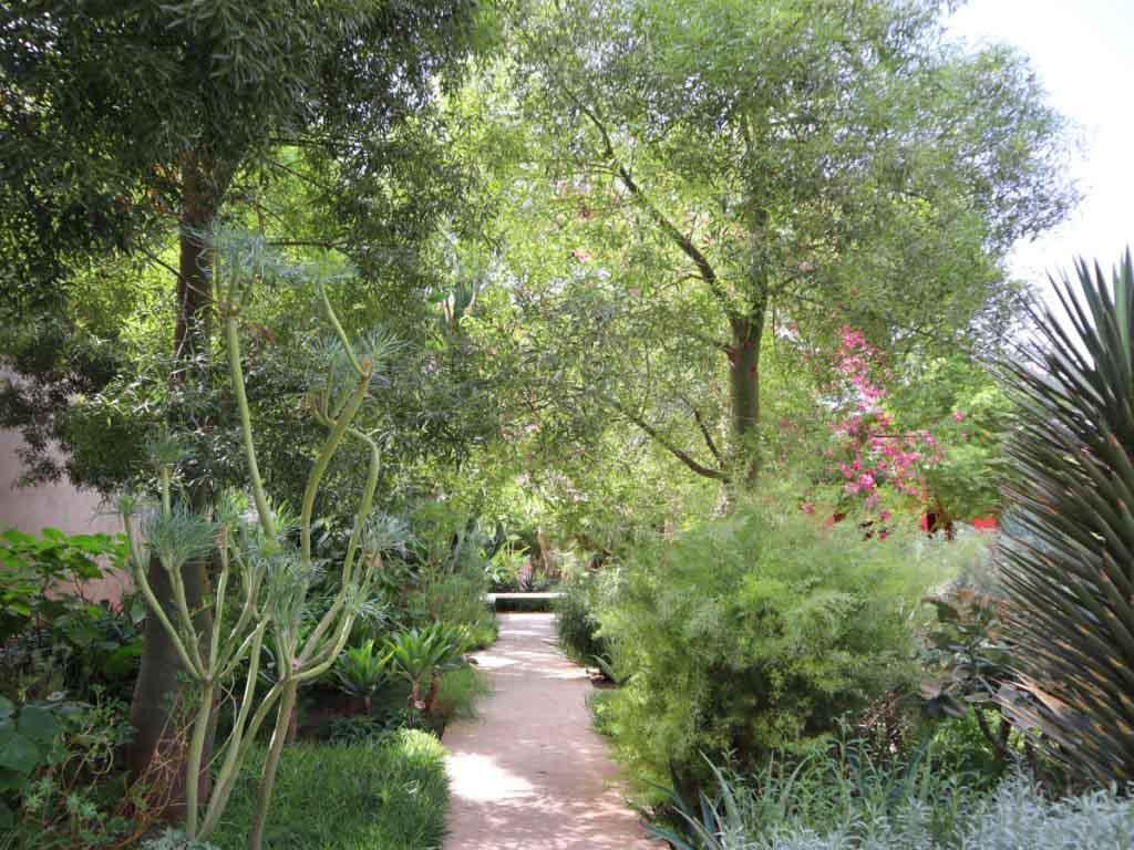 Plants and trees in Le Jardin Secret in Marrakech
