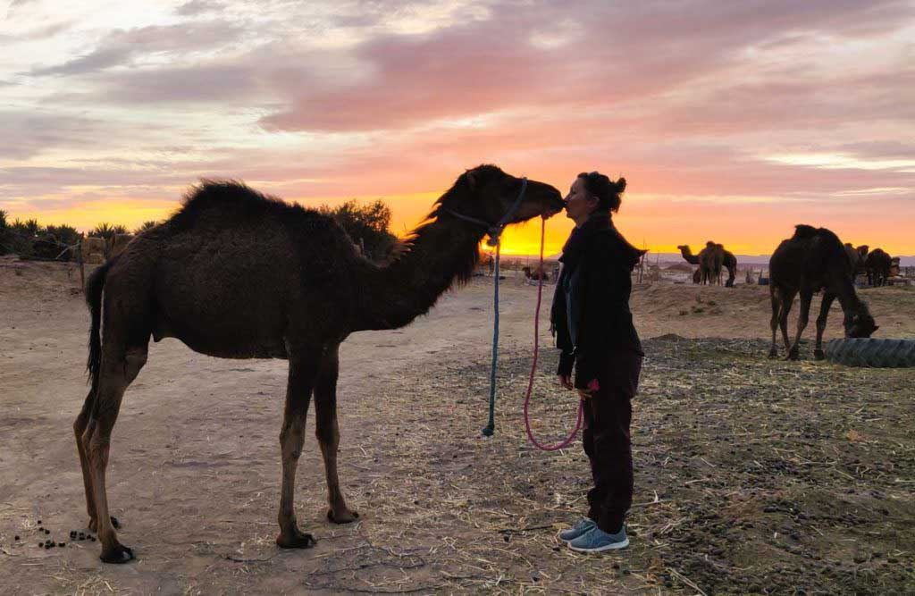 Women kissing camel baby in front of the sunset