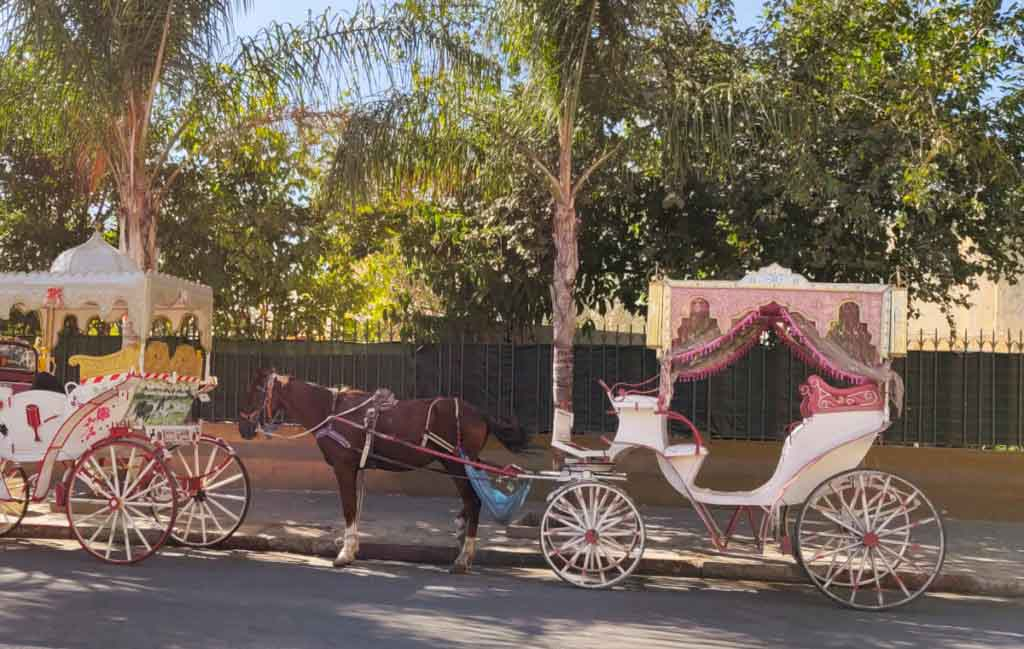 Brown horse with pink and white carriage standing on the road. Meknes travel guide