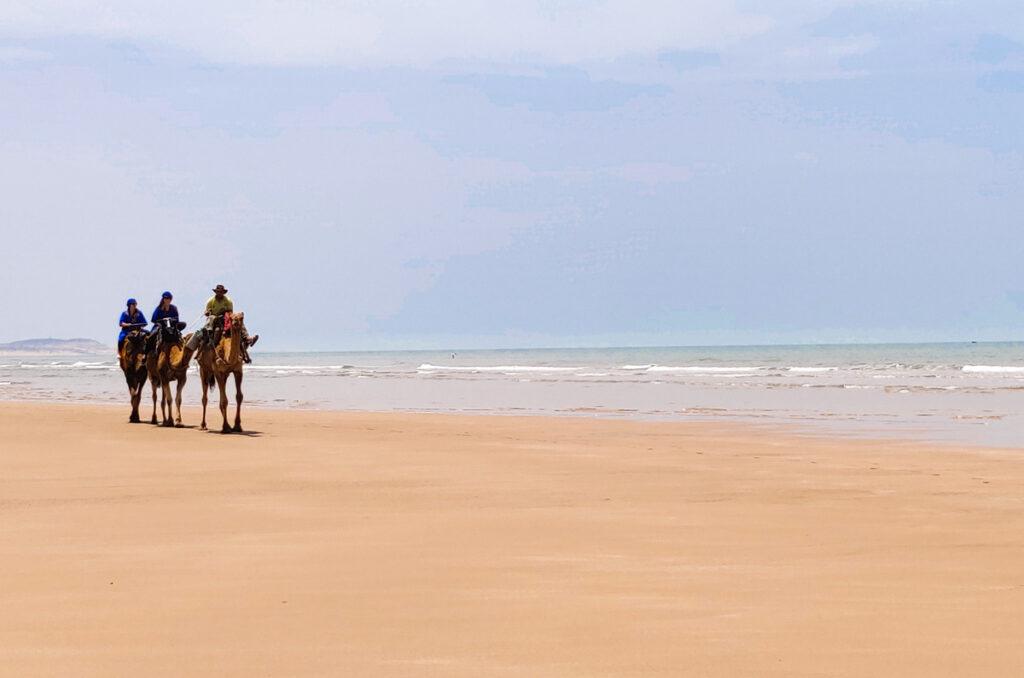 Horses on the beach of Essaouira, going riding on the beach is a fun thing to do in Essaouira