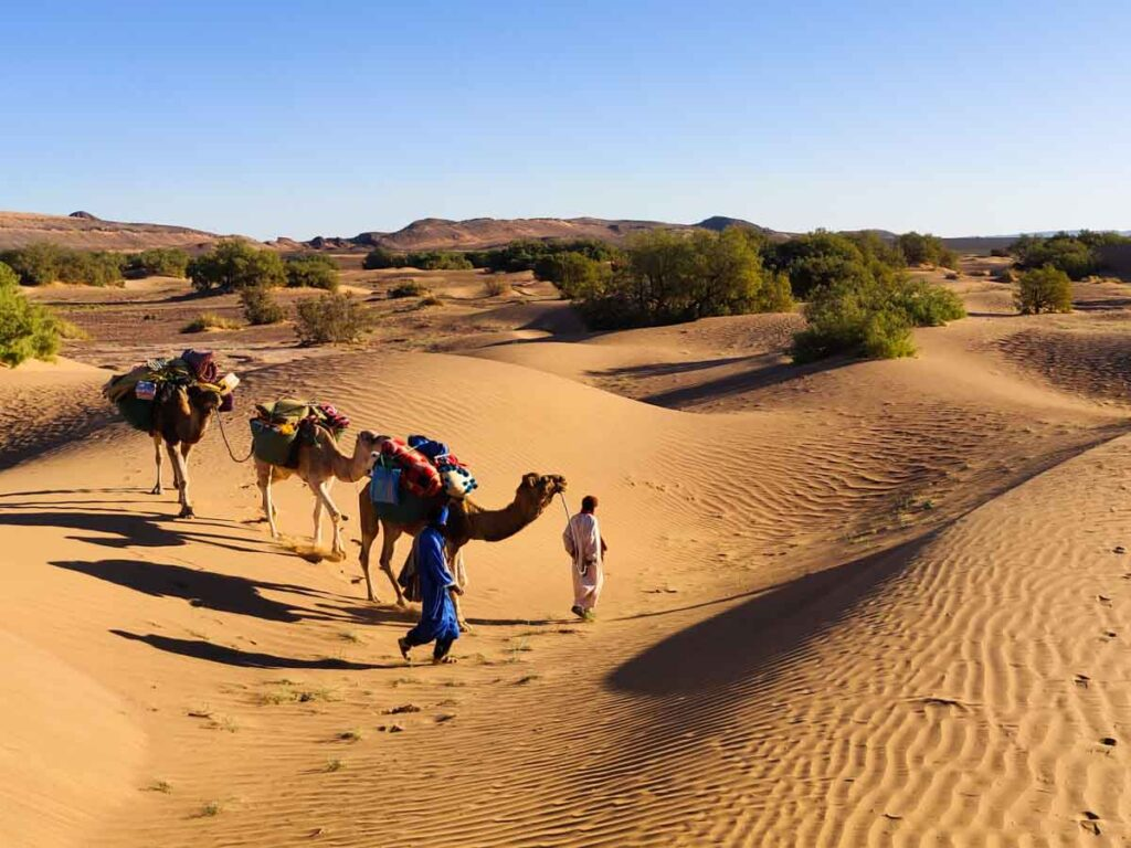 2 men with 3 camels in the sand dunes in the desert in Morocco. Desert hiking trip with Berber Adventure Tours